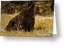 Grizzly Bear-signed-#6672 Greeting Card