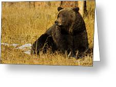 Grizzly Bear-signed-#6721 Greeting Card