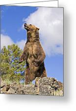 Grizzly Bear Standing On A Ridge Greeting Card