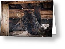Grizzly Bear Under The Cabin Greeting Card