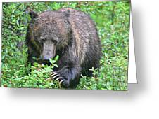 Grizzly Claws Greeting Card