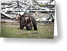 Grizzly Cub Holding Mother Greeting Card