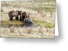 Grizzly Dinner Greeting Card