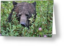 Grizzly In The Berry Bushes Greeting Card