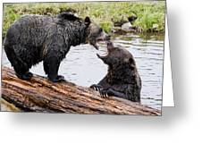 Grizzly Love Greeting Card