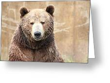 Grizzly Portrait Greeting Card