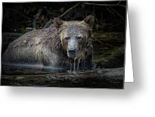 Grizzly Greeting Card