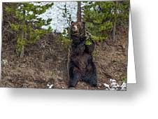 Grizzly Shaking A Tree Greeting Card