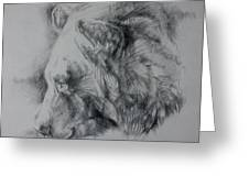 Grizzly Sketch Greeting Card