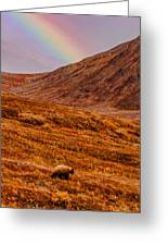 Grizzly Under The Rainbow Greeting Card