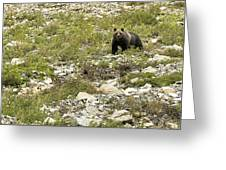 Grizzly Watching People Watching Grizzly No. 3 Greeting Card