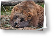 Grizzly's Naptime Greeting Card
