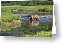 Grizzy Bear Crossing The River Greeting Card