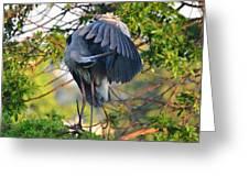 Grooming Blue Heron Greeting Card