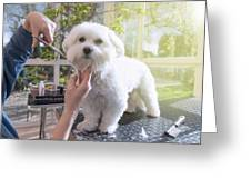 Grooming The Neck Of Adorable White Dog Greeting Card