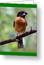 Grosbeak 062314a Greeting Card