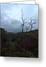 Grotto Trail In Rain Greeting Card
