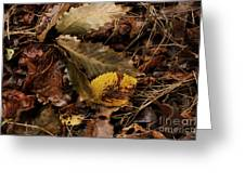 Ground Color Greeting Card