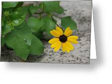 Grounded Sunflower Greeting Card