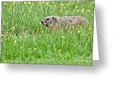 Groundhog In A Field Of Flowers Greeting Card