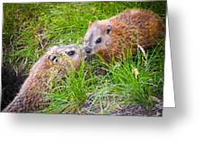 Groundhog Mother Love Greeting Card