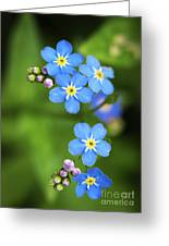 Group Of Blue Flowers Forget-me-not Greeting Card