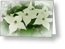 Group Of Chinese Dogwoods Greeting Card
