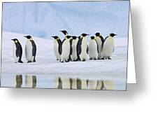 Group Of Emperor Penguins Greeting Card
