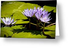 Group Of Lavender Lillies Greeting Card