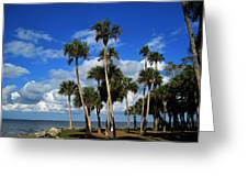 Group Of Palms Greeting Card