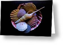 Group Of Shells #1 Greeting Card