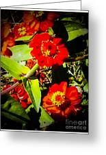Group Of Small Red Zinnia's Greeting Card
