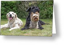 Group Of Three Dogs Greeting Card