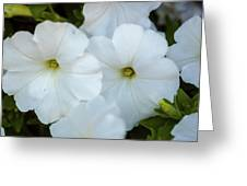 Group Of White Flowers Greeting Card