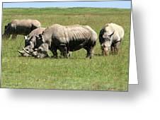 Group Of White Rhino Greeting Card