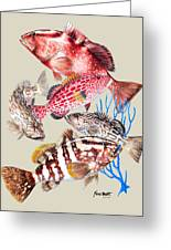 Grouper Montage Greeting Card
