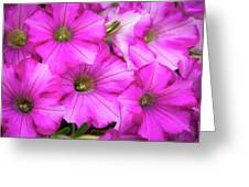 Grouping Of Petunias Greeting Card