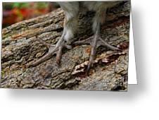 Grouse Feet Greeting Card