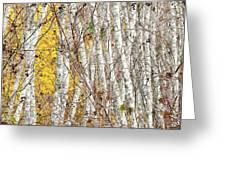 Grove 2 Greeting Card