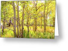 Grove Of Aspens On An Autumn Day Greeting Card