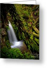 Grove Of Life Greeting Card by Mike Reid