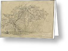 Grove Of Trees [verso] Greeting Card