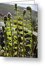 Growing Ferns Greeting Card