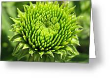 Growing Green Greeting Card