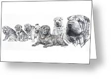 Growing Up Chinese Shar-pei Greeting Card by Barbara Keith