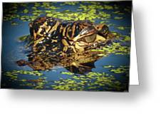 Growing Up Gator, No. 33 Greeting Card