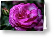 Budding Flower Greeting Card