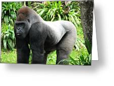 Grumpy Gorilla II Greeting Card