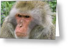 Grumpy Monkey Greeting Card