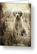 Grunge Puppy Greeting Card by Meirion Matthias